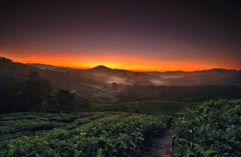 Agriculture Beauty In Nature Business Finance And Industry City Cultures Environmental Conservation Field Fog Forest Green Color Growth Igniting Landscape Leaf Lush Foliage Mountain Mountain Range Nature Night Plant Scenics Social Issues Sunset Travel Tree