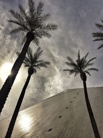Luxor Las Vegas Pyramid Hotel Palms Palm Trees