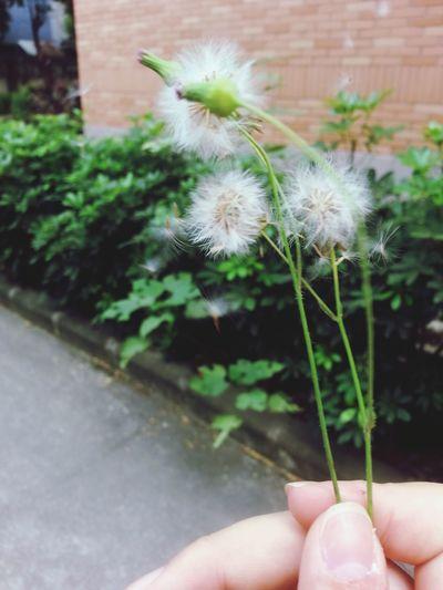 Dandelion Relaxing Enjoy Life Photography = ̄ω ̄= 一吹全跑了~~~= ̄ω ̄=