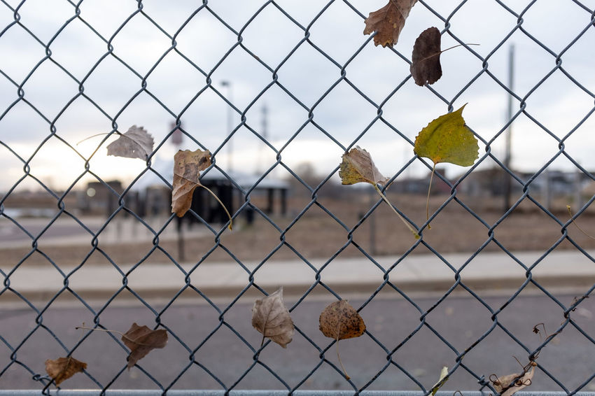 Fence Chainlink Fence Barrier No People Metal Security Leaves Winter Cold Temperature Cloudy Overcast