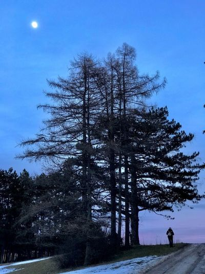 Tree Sky Nature Outdoors Beauty In Nature Landscape Night One Man Only Scenics Full Length Men One Person Winter Forest People Shades Of Winter
