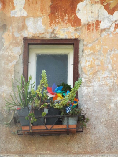 Potted plant on window of house