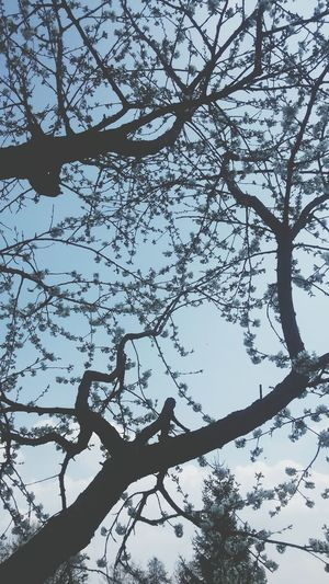 Tree Flowers Flowers In The Sky Sky Enjoying Life Weekends I Love This Pic Hello World Fresh Relaxing