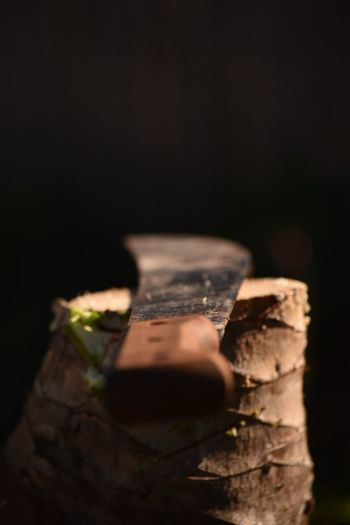 Black Background Close-up Copy Space Food And Drink Indoors  Log Nature Night No People Relaxation Selective Focus Studio Shot Timber Tree Warning Sign Wood Wood - Material