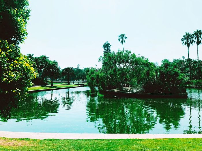 All green everything Green Pond EyeEm Selects Picoftheday EyeEm Gallery Photography Plant Tree Sky Water Nature Growth Lake Beauty In Nature Green Color No People Clear Sky Scenics - Nature Tranquility Outdoors Day Reflection Tranquil Scene Idyllic Swimming Pool