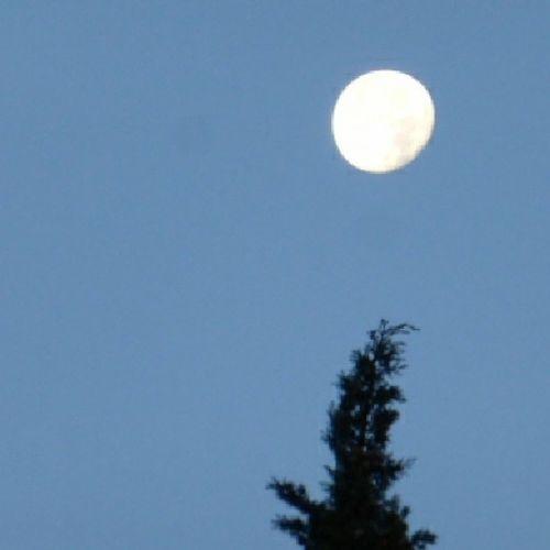 Luna de hoy. Skylovers Lunalunera Tree Zaragoza moon igerszgz