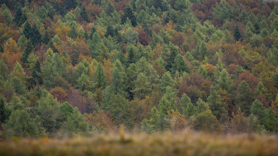 Trees on field in forest during autumn