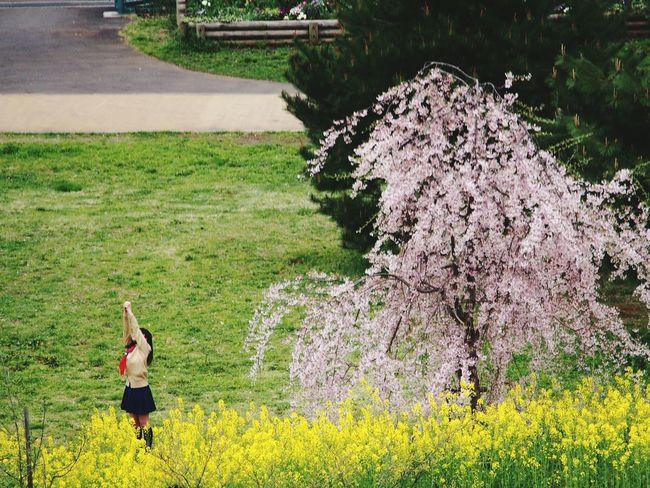 桜 菜の花 女の子 ダンス Sakura Girl Dance