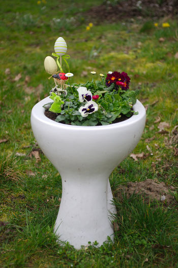 Colors Klo Toilet Beauty In Nature Day Flower Growth Nature No People Outdoors Plant Potted Plant Ostereier Eastereggs