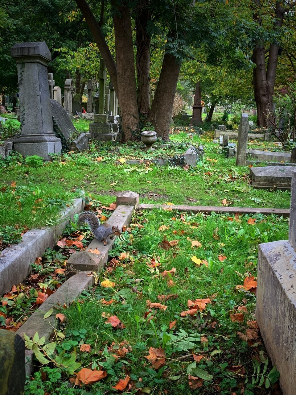 plant, grave, cemetery, tombstone, tree, stone, nature, day, grass, no people, growth, sadness, tree trunk, trunk, park, tranquility, land, outdoors
