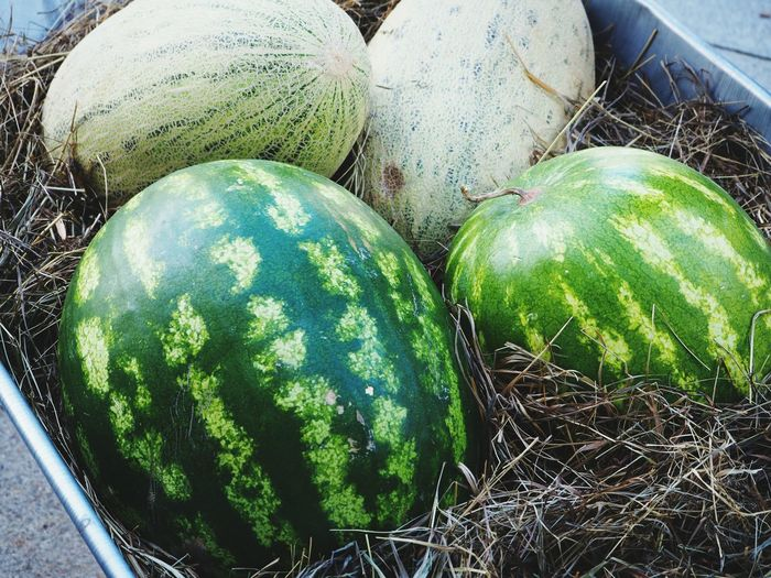 Watermelons, summer Food And Drink Day Food No People Nature City