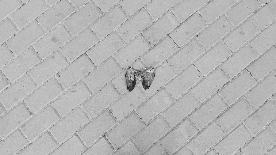 Dead Bird Fly