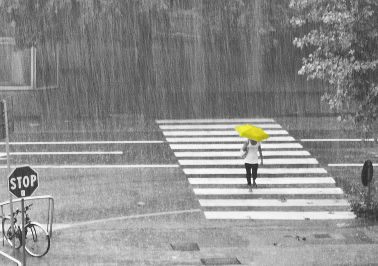 Torrential Rain Rainy Season Crossing Zebra Crossing One Person Crosswalk Walking Road Sign Road Marking Protection Rain Umbrella Cut Out Yellow