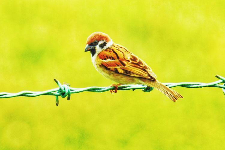 Small bird Bird