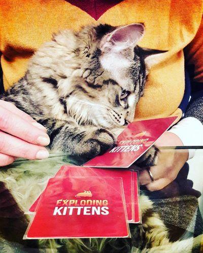 Cards Cat