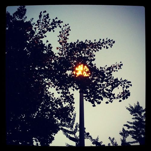 Early morning street lamp. UpTooEarly Art ArthritisIsntAllBad Pretty