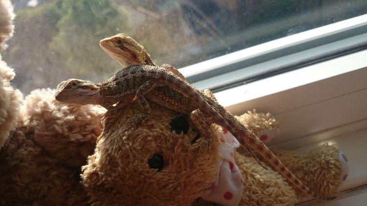 Akira Tetzuo I Love My Pet Lizard
