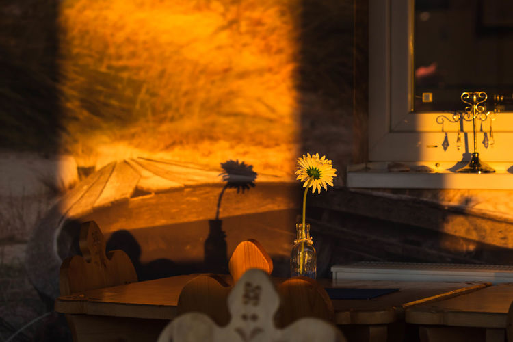 close-up of flower vase on table Beauty In Nature Burning Close-up Decoration Fire Fire - Natural Phenomenon Flame Flower Flower Head Flowering Plant Freshness Gerbera Heat - Temperature Indoors  Nature No People November Nusshain 11 18 Orange Color Plant Table Vase Wood - Material Yellow