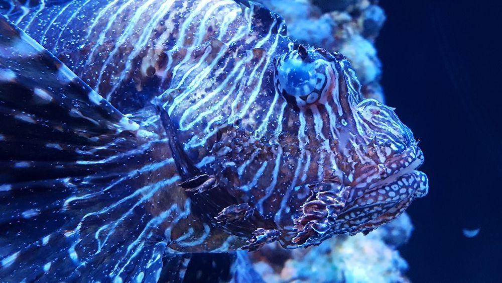 Ägypten  Red Sea Hurghada Egypt Ägypten Red Sea Aquarium Aquarium Life Aquariumfish Fish Fisch Fische