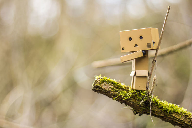 Close-up Danbo