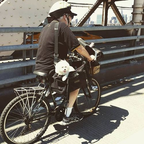Doggy hitching a ride across the bridge Queensborobridge Dogsofinstagram Dogsofnyc Dog bicycle bicycling NYC photooftheday summer bridge
