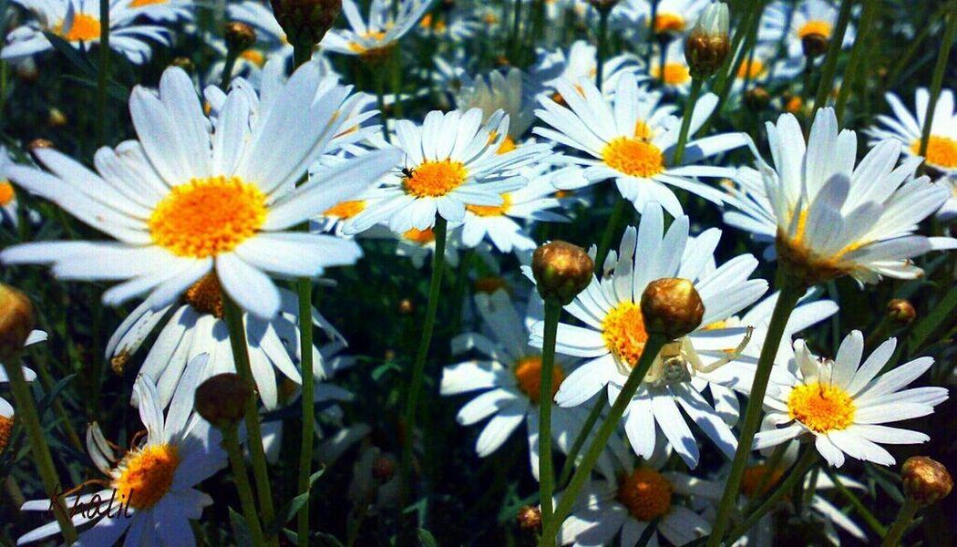 Flowers Flowers,Plants & Garden Flower Collection Nature Nature_collection Naturelovers Spring Flowers EyeEm Nature Lover