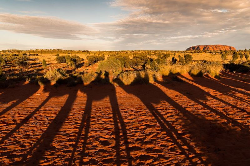 Shadows of camel on arid landscape against sky during sunset