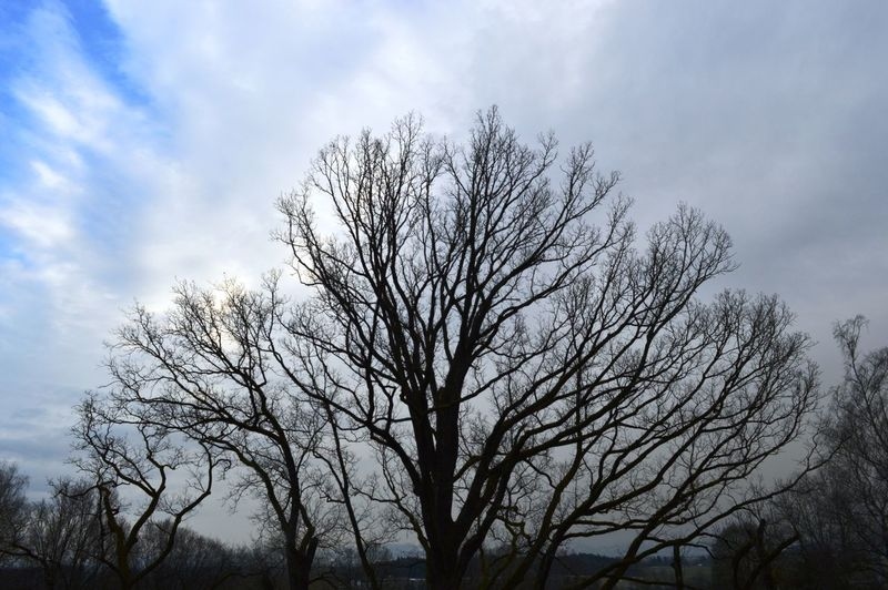 Tree Trunk Tree Tranquility Sky Scenics Outdoors No People Nature Low Angle View Lone Landscape Day Branch Beauty In Nature Bare Tree