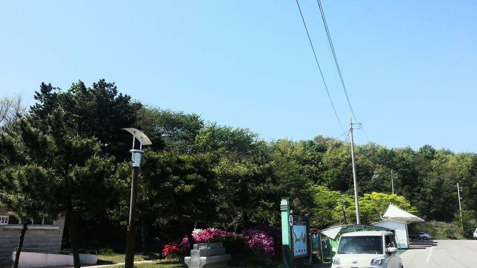 Korea Nice Weather Blue Sky Sindo Island Smartphonephotography Trees Spring Blossoms Short Trip Neighborhood Map