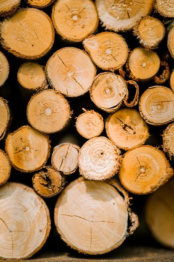 EyeEm Selects Timber Log Lumber Industry Firewood Wood Deforestation Tree Wood - Material Large Group Of Objects Backgrounds Circle Geometric Shape No People