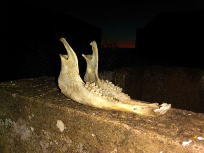 Night Animal Wildlife One Animal No People Animals In The Wild Crocodile Animal Themes Sea Life Nature Alligator Reptile Black Background