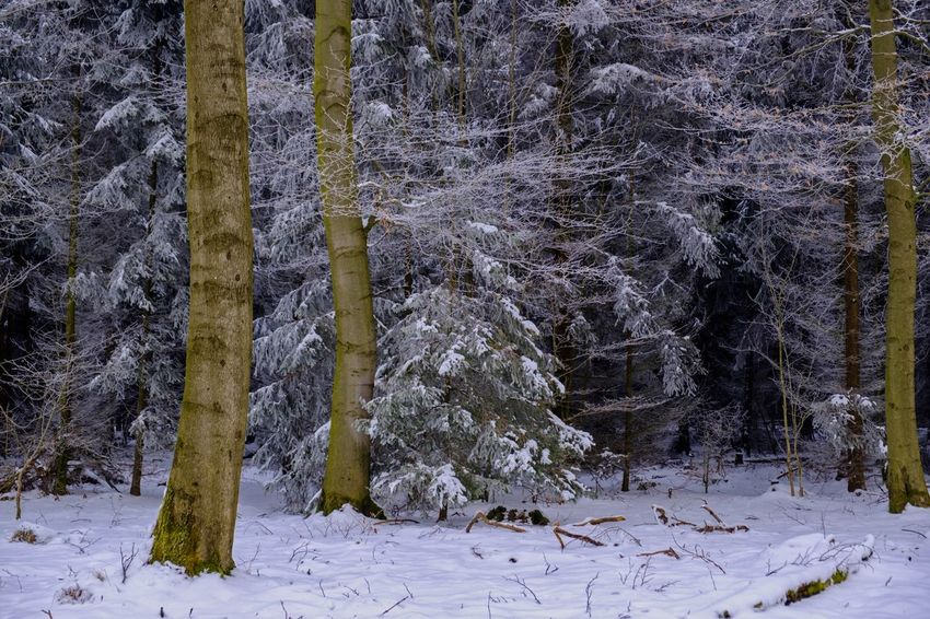 Hohes Gras Kassel Beauty In Nature Cold Temperature Day Forest Growth Landscape Nature No People Outdoors Scenics Snow Tranquil Scene Tranquility Tree Tree Trunk Winter Winterwald