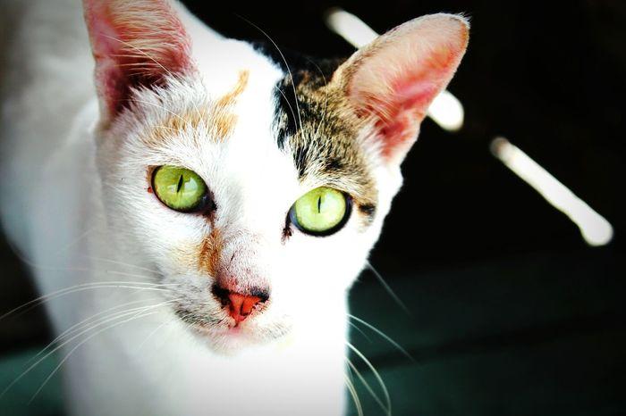 Photoshoot Cat Eye Em Nature Lover Beautiful Animals  Face Expression First Eyeem Photo Beautiful Eyes