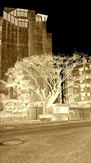 Urban Nature Survivor Dead Or Alive  Growing City EyeEm Nature Lover Presence