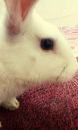 Rabbit ❤️ white eye beauty animal Colour Of Life