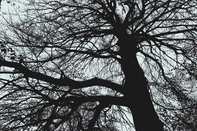 Tree Branch Tree Trunk Bare Tree Nature Low Angle View Silhouette Day Tranquility Beauty In Nature Outdoors Tranquil Scene No People Growth Scenics Sky Dead Tree EyeEmNewHere If Trees Could Speak Fog EyeEmNewHere Lost In The Landscape