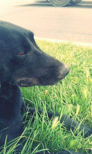 Dog Pets Dogfriend