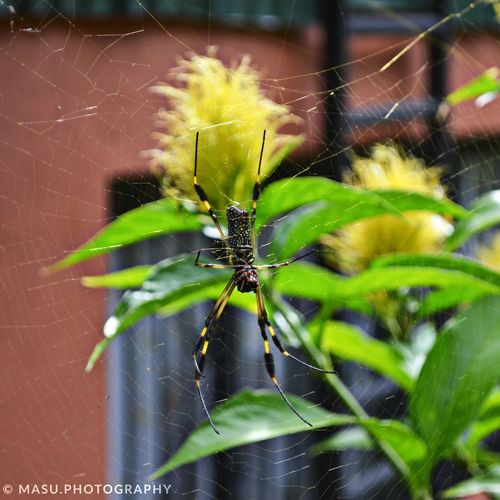 Mientras trabajaba en un 15 años 📷👌🏻 Nikonphotography Nikon Araña Costa Rica