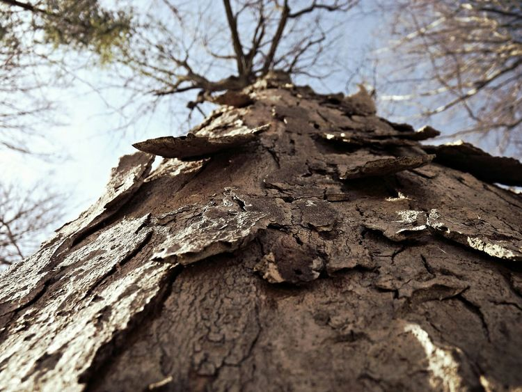 Tree Trees TreePorn Tree And Sky Sky Sunny Day On A Walk No Leafs Brown