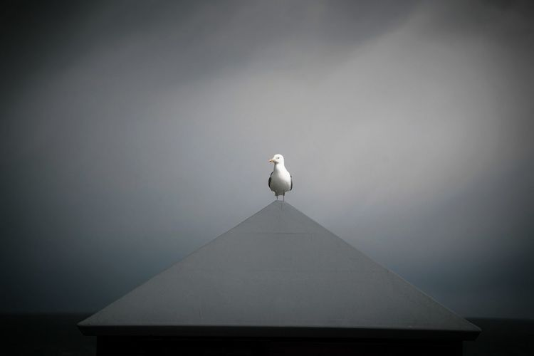 Low angle view of seagull perching on building