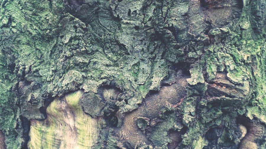 Tree Bark Patterns Tree Bark Texture Tree Trunk Forest Photography Details Textures And Shapes Details Of Nature Background Photography Screensaver Shot Abstract Nature Forest Adventure Macro Nature Details In Close Up Nature Day Outdoors Tree Backgrounds Textured  No People Full Frame Close-up Forest Beauty In Nature Green Rough Texture