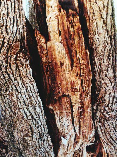 Ağaç Kabuğu
