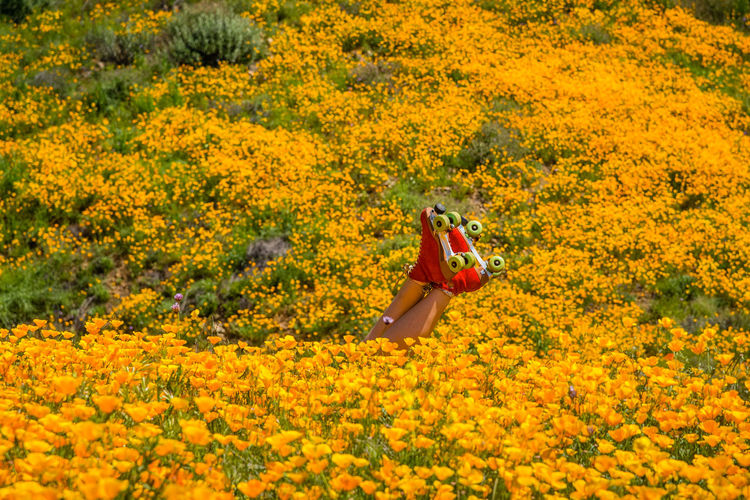 Low section of person in skating amidst flowers