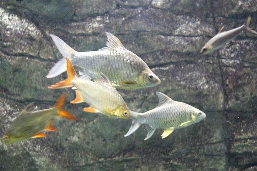 fish nature photo