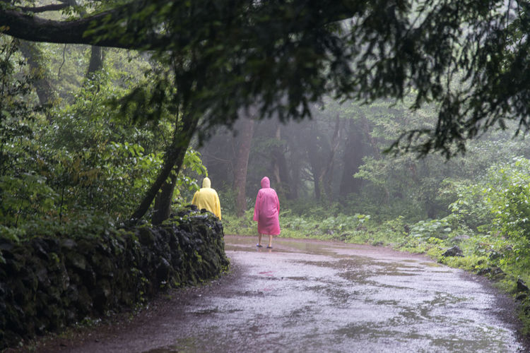 rainy day of Bijarim which is a famous forest in Jeju Island, South Korea Beauty In Nature Bijarim Day Forest Full Length Growth JEJU ISLAND  Men Nature Outdoors Pathway People Rain Real People Rear View Sky The Way Forward Tree Two People Walking Women