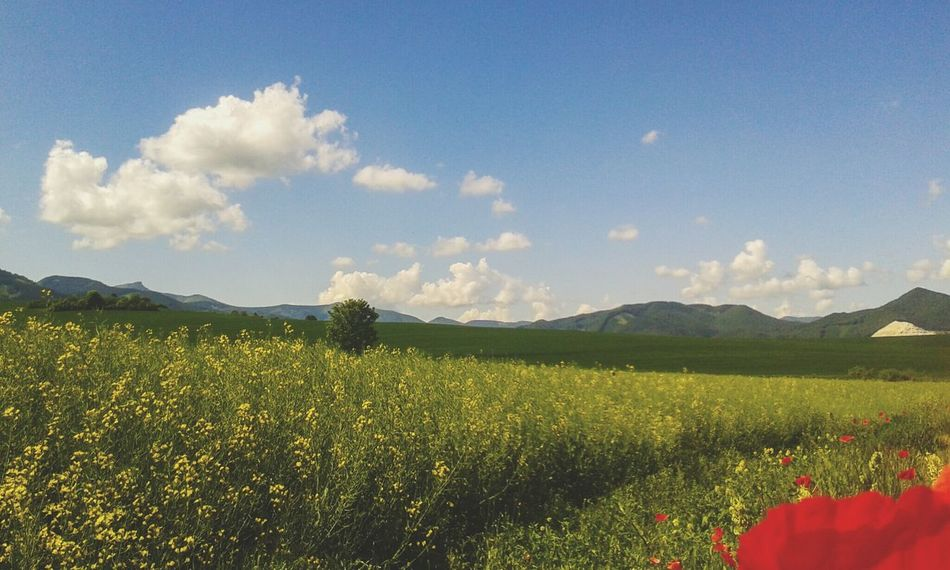 Landscape Agricultural Land Rapeseed Poppy Flowers Mountains Mala Fatra Rajecka Dolina Slovakia