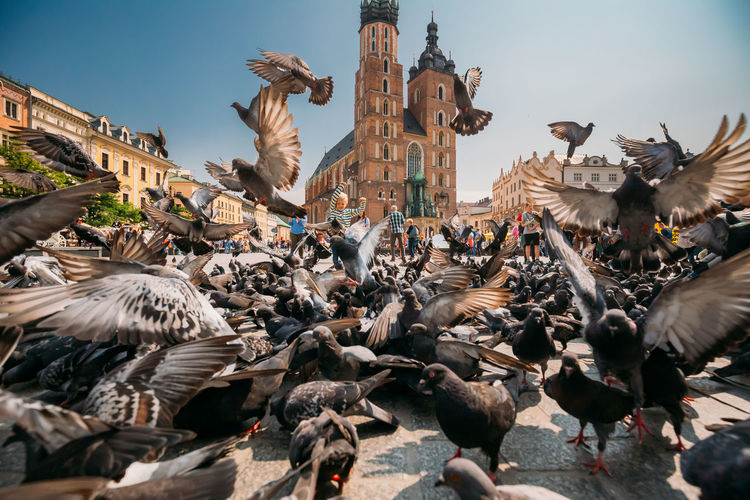 Krakow, Poland - August 28, 2018: Boy Playing With Doves Birds Near St. Mary's Basilica. Pigeons Take-off Flying Near Church Of Our Lady Assumed Into Heaven. UNESCO World Heritage Site. 2018 In One Photograph Bird Architecture Large Group Of Animals Animal Themes Krakow Poland Krakow,Poland Krakow Poland Dove Pigeon Child Childhood Boy Flying Unesco UNESCO World Heritage Site Church Mary Saint Heritage Landmark People Old Town Europe My Best Photo Analogue Sound Streetwise Photography The Art Of Street Photography
