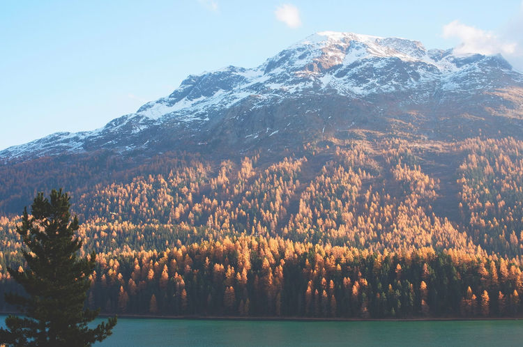 St. Moritz lake and larches forest view - engadine swiss alps Larches Trees Beauty In Nature Day Engadine Switzerland Engadinerdorf Growth Landscape Larches Golden Light Mountain Mountain Range Nature No People Outdoors Plant Scenery Scenics Sky St Moritz Lake Swiss Alps Switzerland Tranquil Scene Tranquility Tree Water