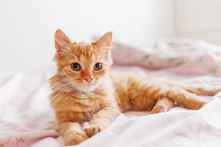 Portrait of kitten on bed
