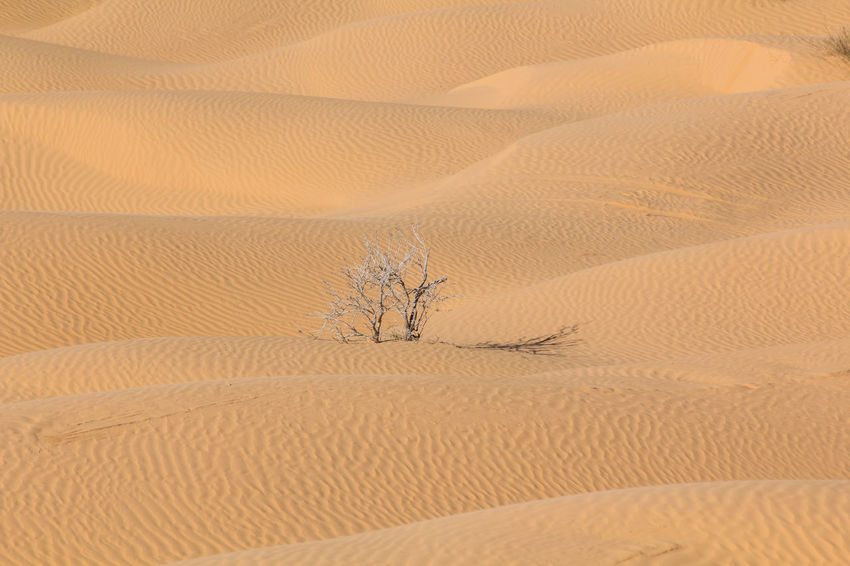 Adventure Arid Climate Backgrounds Beauty In Nature Brown Desert Desert Desert Landscape Extreme Terrain Full Frame Landscape Nature Non-urban Scene Off The Beaten Path Outdoor Remote Sahara Sand Sand Dune Solitude Tranquil Scene Tranquility Travel Destinations Tunisia Wave Pattern Been There.